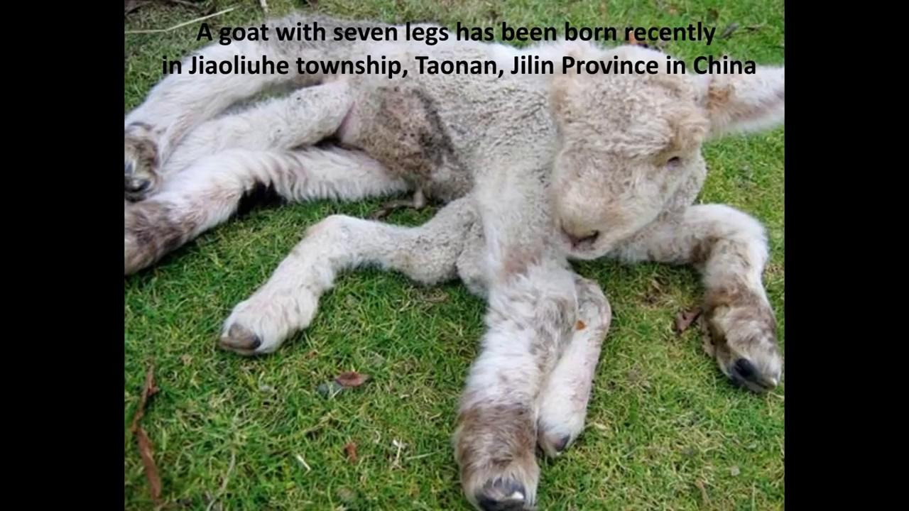 an overview on the mysterious creature Posted: jul 22, 2018 10:07am edt silly science: a mysterious creature washed  ashore a mysterious creature's skeleton washed up on a beach in maine.