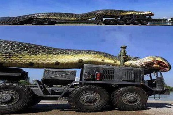 VIDEO OF GIANT SNAKE CAUGHT IN RED SEA IS HERE.REAL ANACONDA